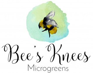 Bee's Knees Microgreens